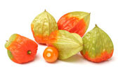 Physalis fruit isolated on white background — Stock Photo