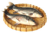 Fresh carp fish — Stock Photo
