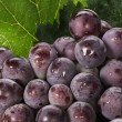 Grapes — Stock Photo #30300033