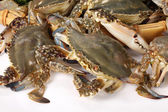 Crabs — Stock Photo