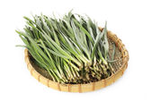 Leek on white background — Stock Photo