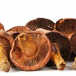 Stock Photo: Edible mushroom