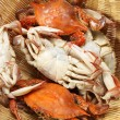 Steamed crabs — Foto de stock #30865839
