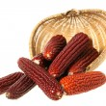 Traditional Thanksgiving corn — Stock Photo #30894411