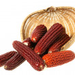 Colorful traditional Thanksgiving corn — Stock Photo #31108289
