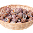Spiral shells on white background — Stock Photo