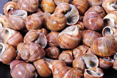 Spiral shells background — Stock Photo