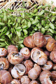 Spiral shells — Stock Photo