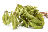 Green soy bean — Stock Photo