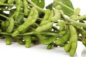 Soybean — Stock Photo