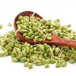 Green soybean sprouts — Stock Photo