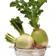 Party loyalty radish — Stock Photo