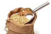 Gold soybean — Stock Photo