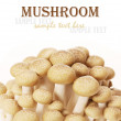 Brown beech mushrooms (Hypsizygus marmoreus) — Stock Photo