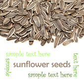 Ayçiçeği tohumları — Stok fotoğraf