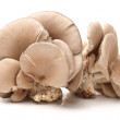 Oyster mushroom on white background — Stock Photo