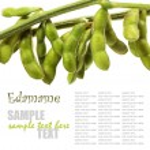 Soybean — Stock Photo #34530515