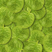 Malabar spinach leaves background — Stock Photo