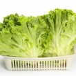 Fresh lettuce — Stock Photo