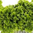 Fresh lettuce — Photo