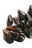 Fresh mussels — Stock Photo