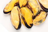 Cooked mussels — Stock Photo