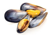 Fresh mussel — Stock Photo
