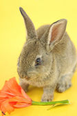 Lilla kanin — Stockfoto