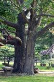 Panchina di pietra nel parco — Foto Stock