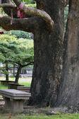 Stenen bankje in het park — Stockfoto