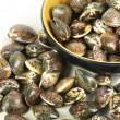 Clams — Stock Photo #35581089