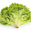 Fresh lettuce on white background — Stock Photo