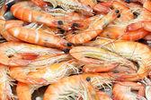 Shrimps background — Stock Photo