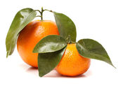 Portakal ve mandalina — Stok fotoğraf
