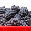 Stock Photo: Ripe grapes