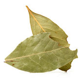 Dry bay leaves — Stock Photo