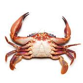 Sea crab — Stock Photo