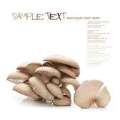 Raw oyster mushrooms — Stock Photo