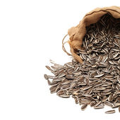 Full bag of Sunflower seeds — Stockfoto