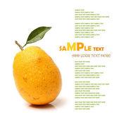 Orange z liści — Zdjęcie stockowe