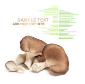 Oyster mushrooms — Stock Photo
