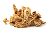 Dried oriental willow mushrooms — Stock Photo