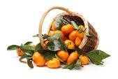 Juicy tangerines — Stock Photo