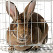 Bunny In cage — Stock Photo #44012829