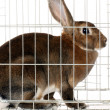 Bunny In cage — Stock Photo #44012867