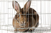 кролика в клетке — Стоковое фото