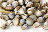Whole clams in tray — Stock Photo