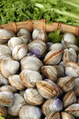 Raw cockles in basket — Stock Photo