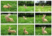 Rabbits in field — Stock Photo