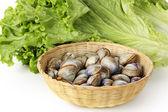 Fresh clams — Foto de Stock